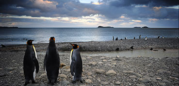 0008_Penguins_Brothers