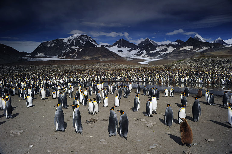 Penguins 3D Still - nWave Film