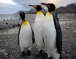 0007_Penguins_Brothers